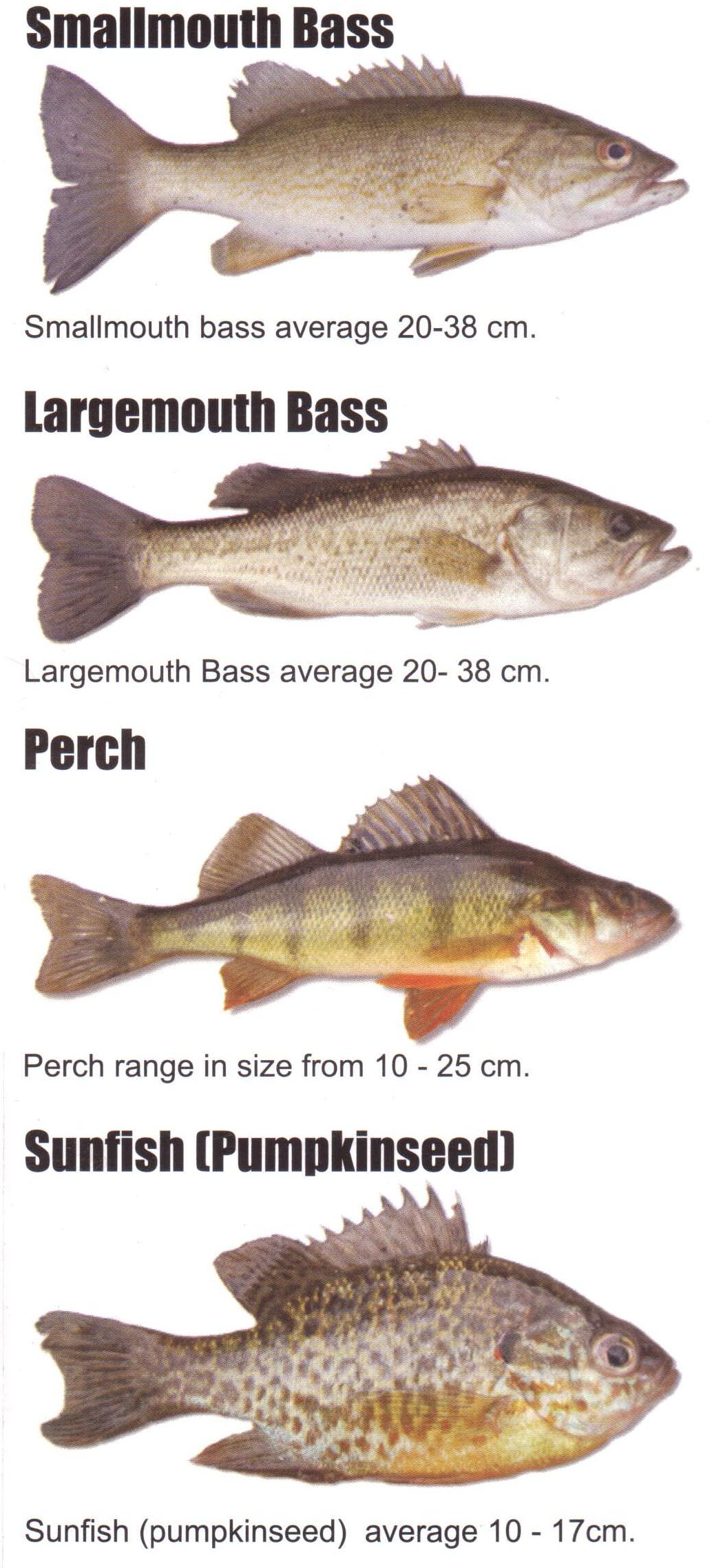 Related keywords suggestions for lake trout species for Fish representative species